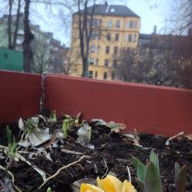 Une fleur, un parc, Stokholm